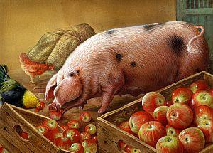 apples&pig
